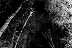 Bosque negro
