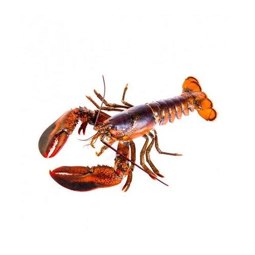 新鲜龙虾(中号)