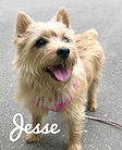 Jesse-Kiko-w-name.jpg