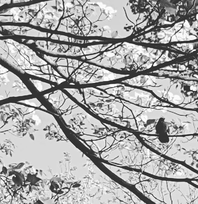 Good Morning little Songbird 🎶__#singin
