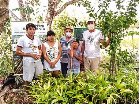 Entidades distribuem mudas de árvores nativas em aldeias indígenas da região Sudoeste do Pará.