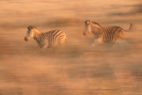 Africa_michellesole-4599.jpg