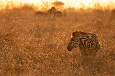 Africa_michellesole-4527.jpg