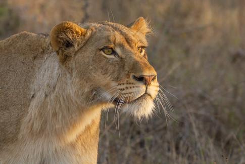 Africa_michellesole-993.jpg