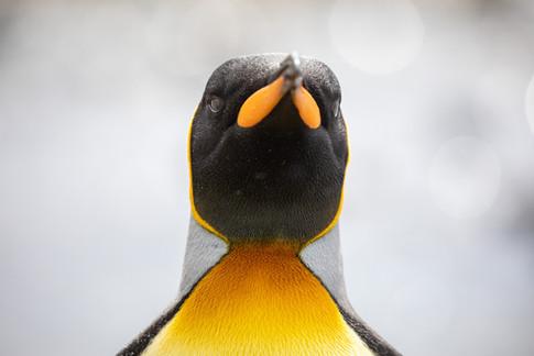 Antarctica_michellesole-4539.jpg