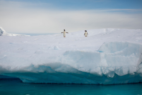 Antarctica_michellesole-9434.jpg