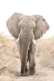 Africa_michellesole-4979.jpg