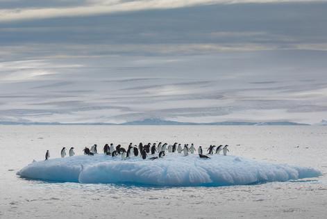 Antarctica_michellesole-6691.jpg