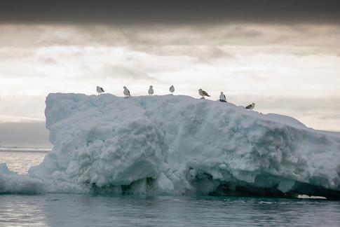 Antarctica_michellesole-6648.jpg