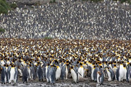Antarctica_michellesole-0936.jpg
