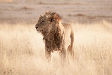 Africa_michellesole-8836.jpg