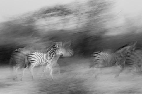 Africa_michellesole-7899.jpg