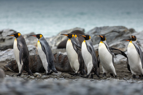 Antarctica_michellesole-5385.jpg