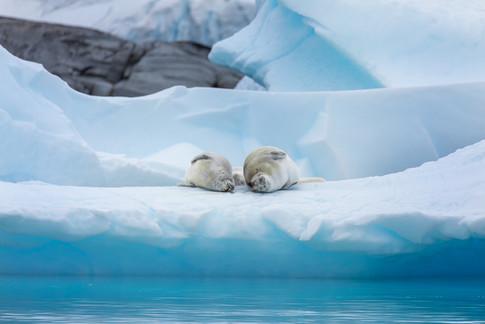 Antarctica_michellesole-9289.jpg