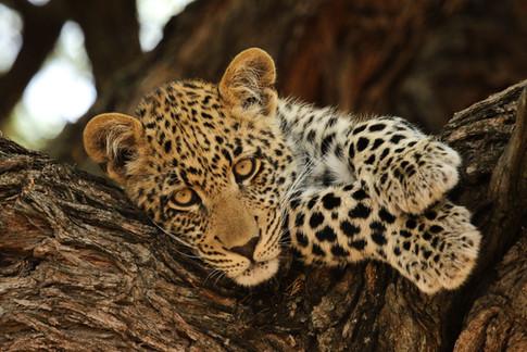 Africa_michellesole-8857.jpg