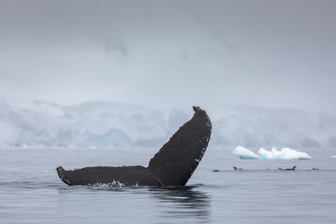 Antarctica_michellesole-4475.jpg