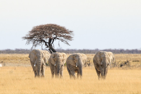 Africa_michellesole-9319.jpg