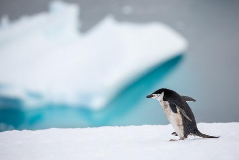 Antarctica_michellesole-7733.jpg