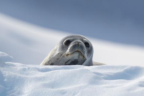 Antarctica_michellesole-2274.jpg