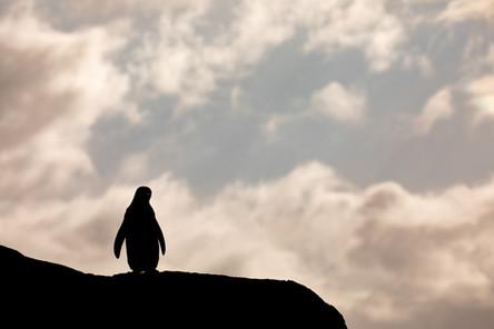 Antarctica_michellesole-3106.jpg