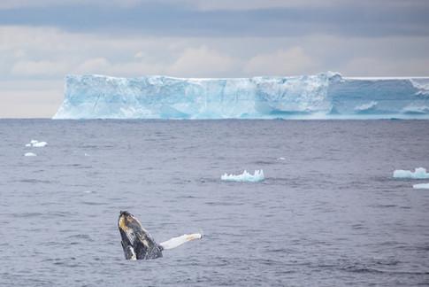 Antarctica_michellesole-2716.jpg