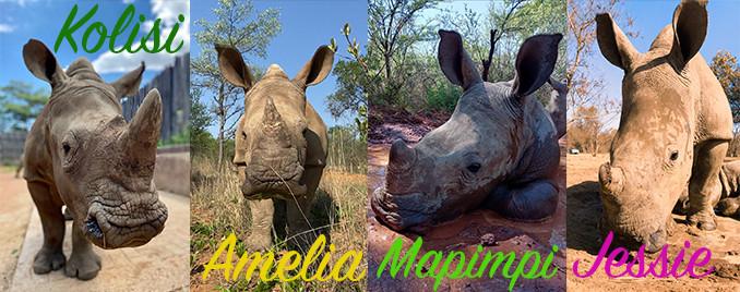 Orphaned Rhino Calves
