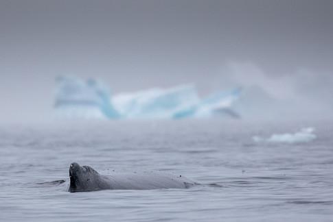 Antarctica_michellesole-4438.jpg