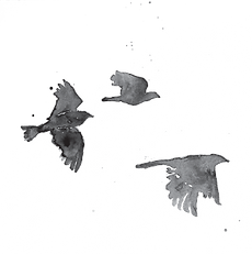 Crows image.png