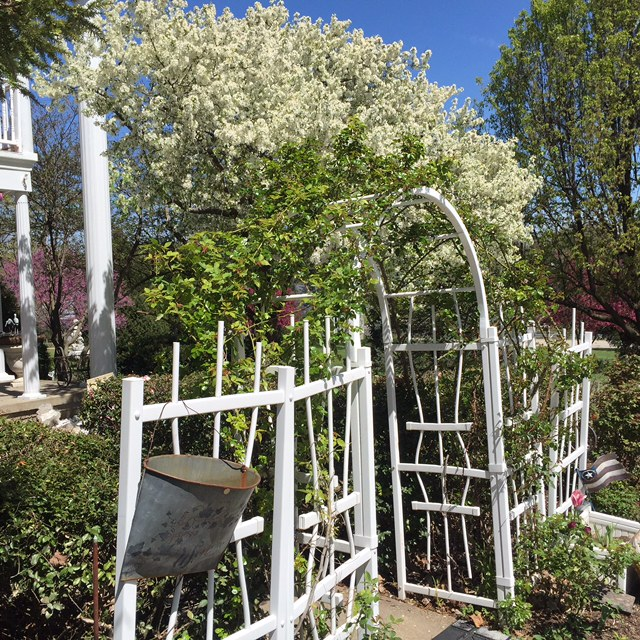 Rose Arbor (entrance)