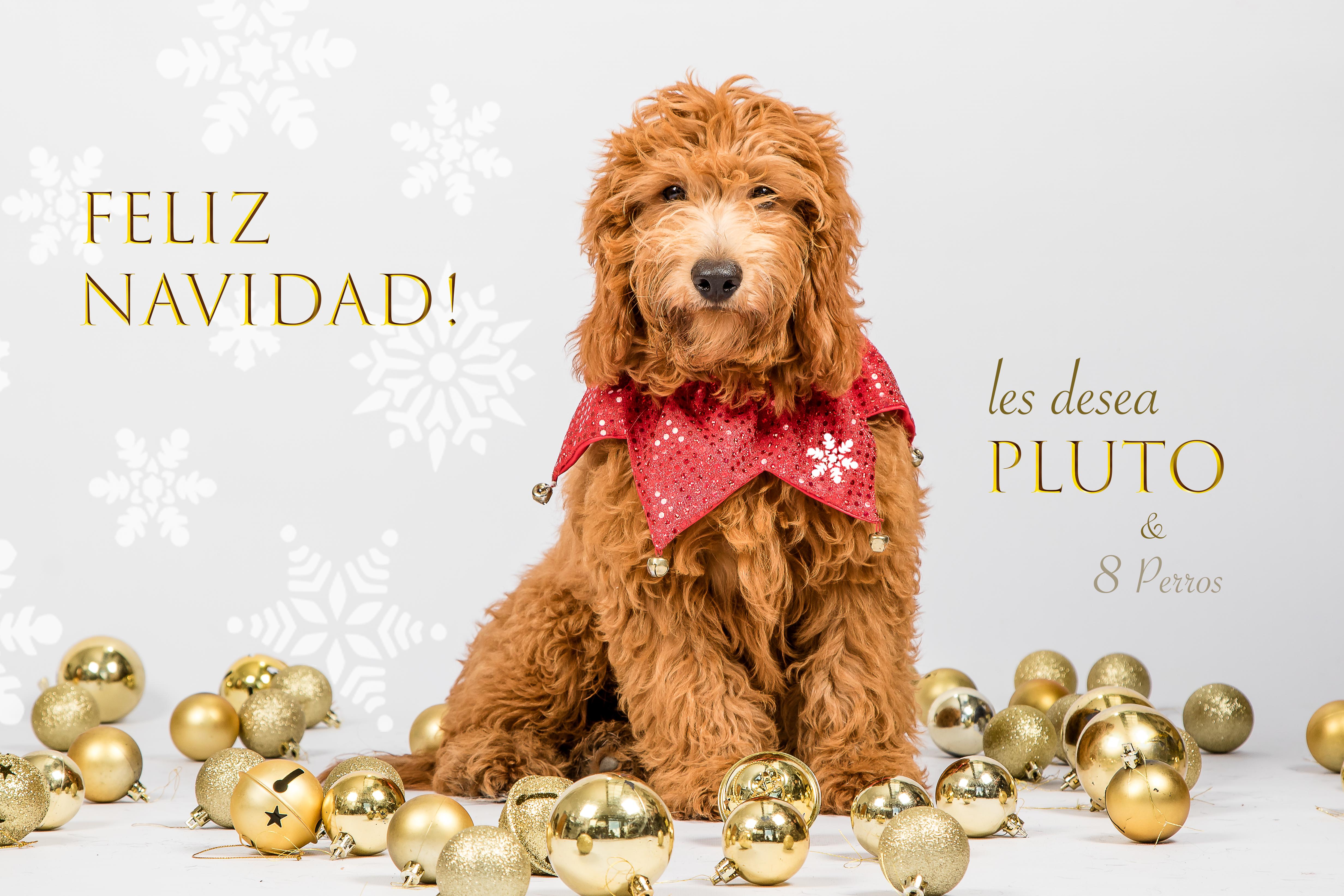 43 Pluto