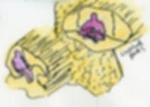 crystal-pods.jpg