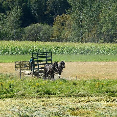 Farming ( 3 )