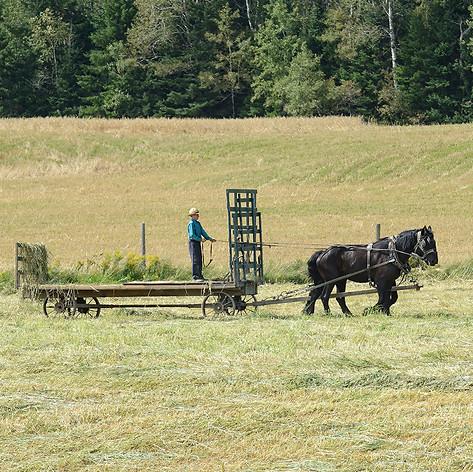 Farming ( 5 )