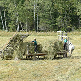Farming ( 4 )