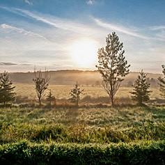 Early Morning Glow