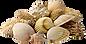 shells_small.png