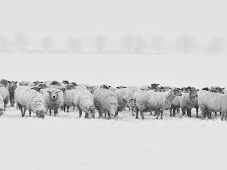 Following the herd or not....that is the question...