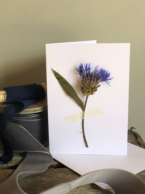 Wild Corn Flower - Pressed Flower Card