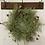 Thumbnail: Everlasting Green Wreath