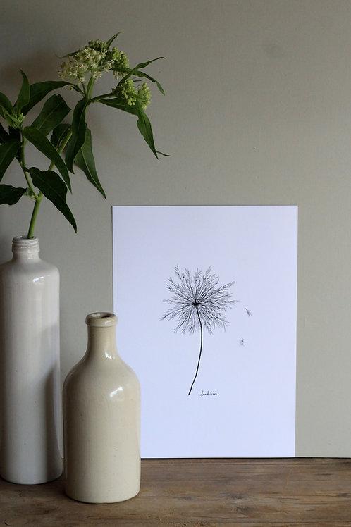 Original Ink Illustration - Dandelion