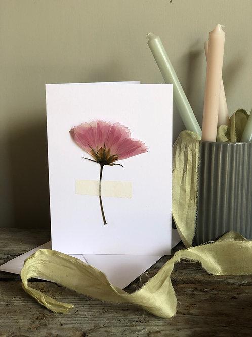 Cosmos -  Pressed Flower Card