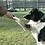 Thumbnail: Company Of Animals CLIX Multi-Clicker
