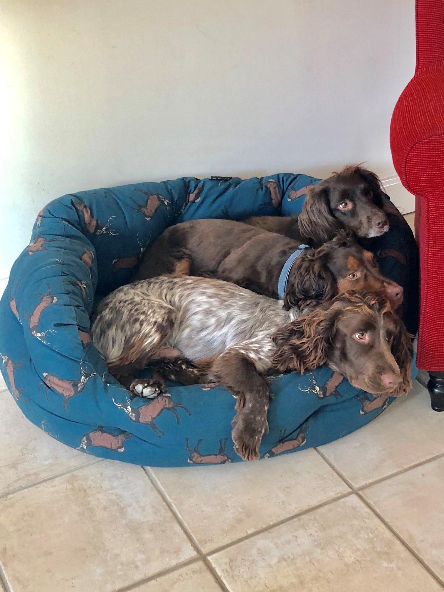 Izzy, Arlo & Flynn