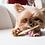 Thumbnail: Earth Animal No Hide Beef Dog Stix 10pk
