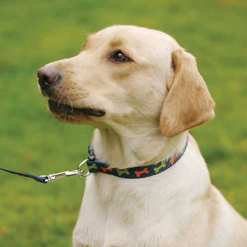 Rosewood Wag 'N' Walk Bone Collar