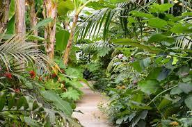 Idée de sortie en famille :  LE CARBET AMAZONIEN