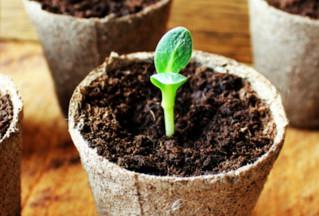 Faire ses semis en hiver