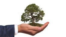 L'obligation réelle environnementale : c'est quoi ?