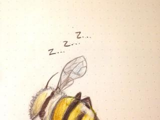 Mais ou sont les abeilles l'hiver ?