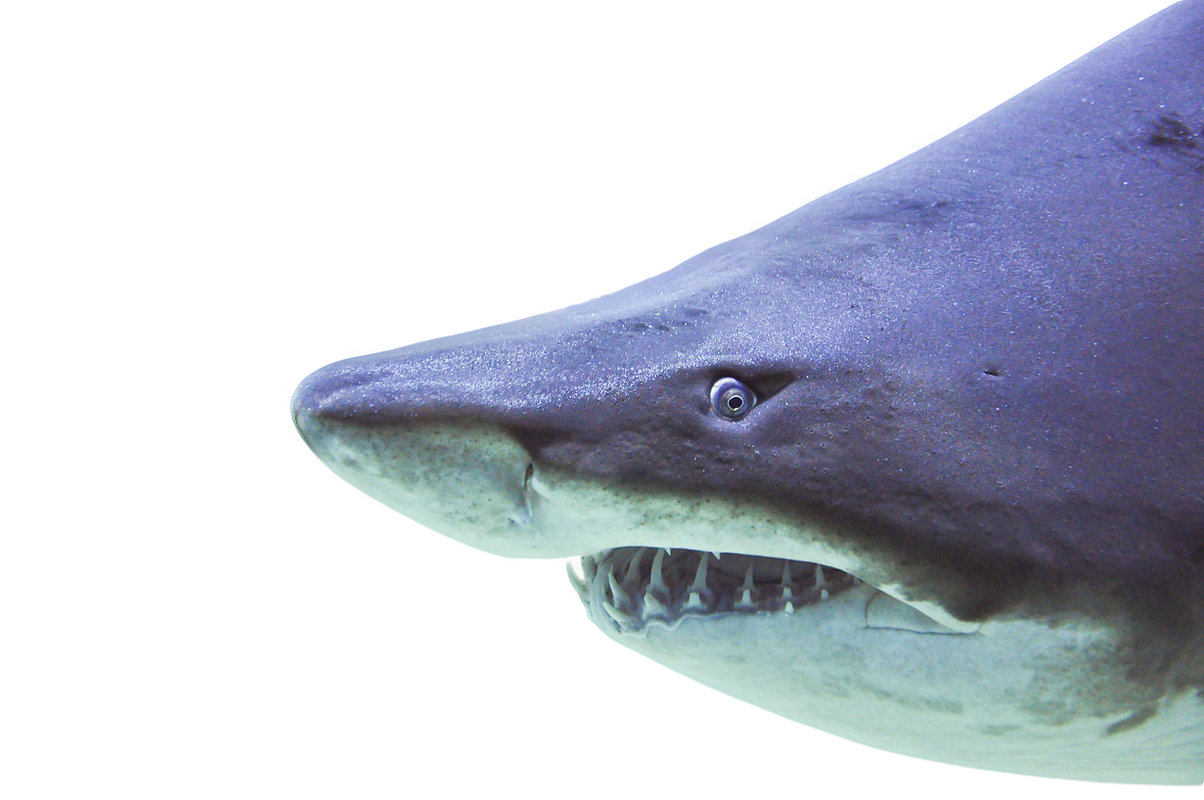 Content Strategy Data Shark